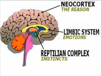 Beyinin bölümleri